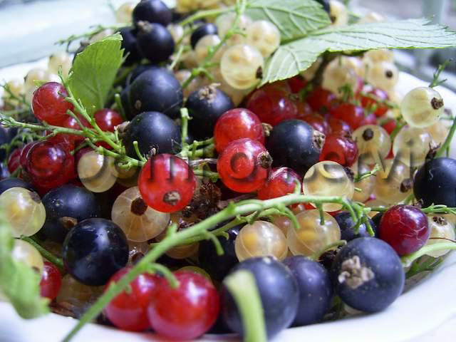 Five minutes_of_black_currant_1
